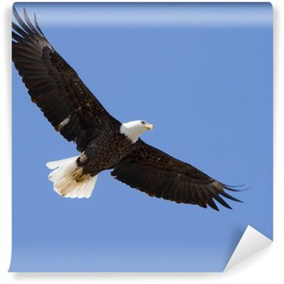Eagles wall murals the natural motifs pixers for Eagle wall mural
