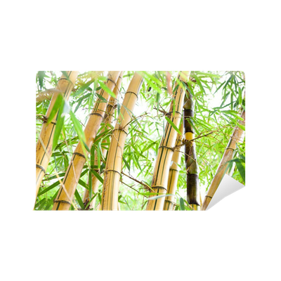 Bamboo forest wall mural pixers we live to change for Bamboo forest mural