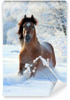 Bay horse running in winter