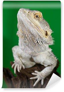 Wall Mural - Vinyl Bearded dragon reptile lizard on a branch on green blurred backg