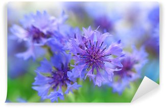 Beautiful cornflowers, outdoors