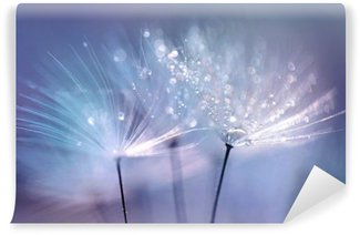 Beautiful dew drops on a dandelion seed macro. Beautiful blue background. Large golden dew drops on a parachute dandelion. Soft dreamy tender artistic image form. Wall Mural - Vinyl