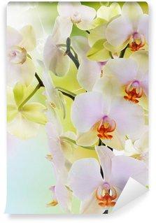 Beautiful flowers Japanese Orchid.Beauty.Flora Wall Mural - Vinyl