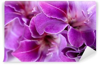 Beautiful gladiolus flower close up Wall Mural - Vinyl