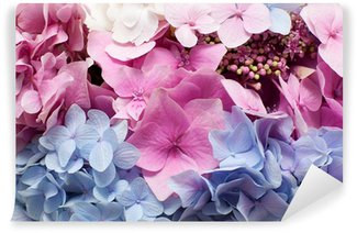 Beautiful hydrangea background
