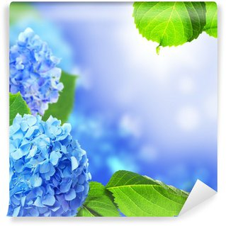 Beautiful hydrangea flowers on a blue background.