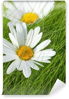 Beautiful marguerites on the grass