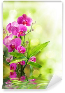 beautiful orchid and bamboo for border treatment spa on water Wall Mural - Vinyl