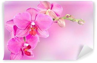 beautiful pink orchid flower Wall Mural - Vinyl