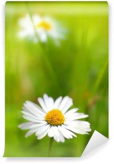 Beautiful, soft daisies