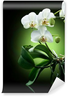 Beautiful White Orchid isolated on black Wall Mural - Vinyl