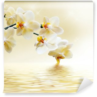 Beautiful white orchid Wall Mural - Vinyl