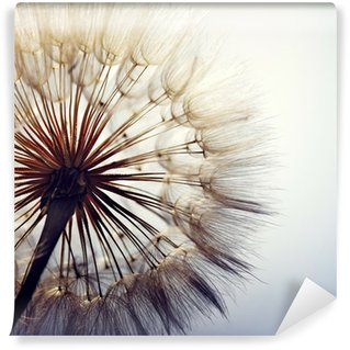 Wall Mural - Vinyl big dandelion on a blue background