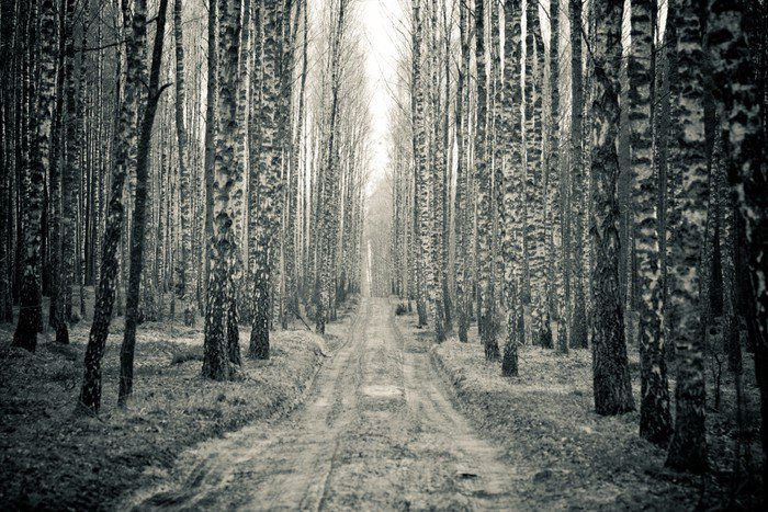 Birch black and white forest wall mural vinyl pixers for Black and white forest wall mural