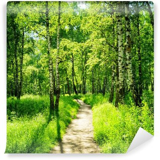 Vinyl Wall Mural Birch forest on a sunny day. Green woods in summer