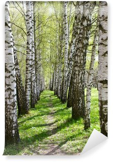 Wall Mural - Vinyl Birch-tree alley