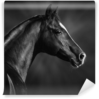 Wall Mural - Vinyl Black and white portrait of arabian stallion