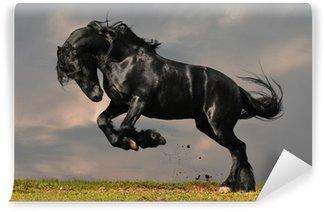 black friesian stallion gallop in sunset