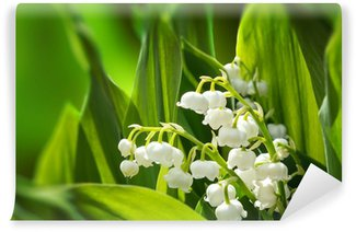 Blooming Lily of the valley in spring garden Wall Mural - Vinyl