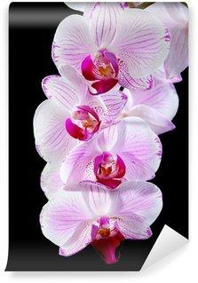Blooming pink orchid. Wall Mural - Vinyl