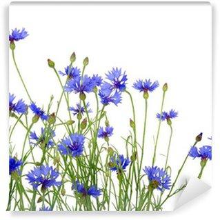 blue cornflowers Wall Mural - Vinyl