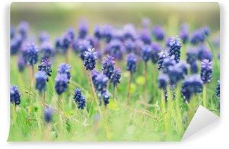Blue hyacinth flowers Wall Mural - Vinyl