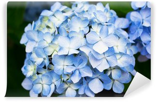 Blue Hydrangea flowers Wall Mural - Vinyl