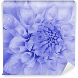Blue toned dahlia with water drops. Close-up. Wall Mural - Vinyl