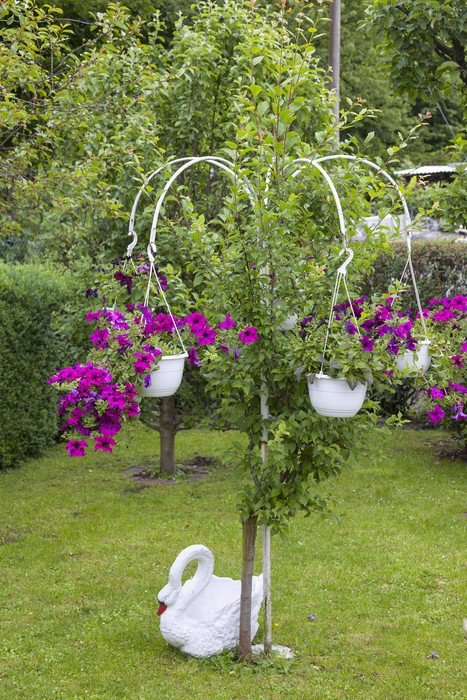 Blumenampel Als Gartendekoration Wall Mural - Vinyl • Pixers® • We