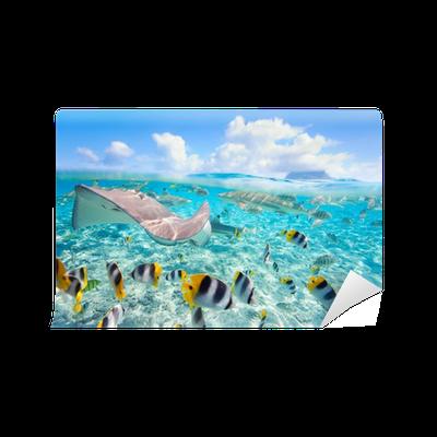 Bora bora underwater wall mural vinyl pixers we for Bora bora wall mural