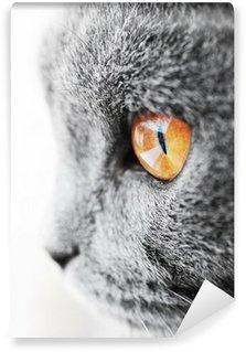 British blue cat detail