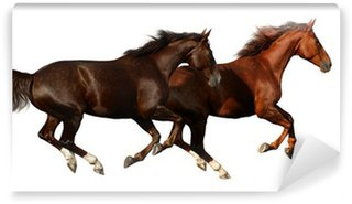 budenny horses gallop - isolated on white