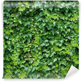 Climbing ivy background.