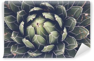 Wall Mural - Vinyl Close up of agave succulent plant, selective focus, toning