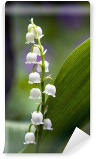 Close up of Lily of the valley Wall Mural - Vinyl