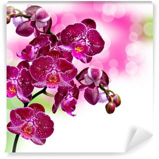 Close up of orchid flower Wall Mural - Vinyl