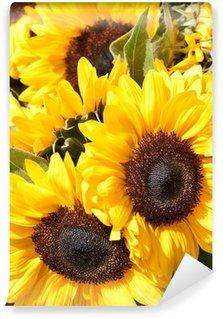 Closeup of yellow sunflowers