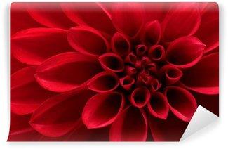 Closeup on red dahlia flower