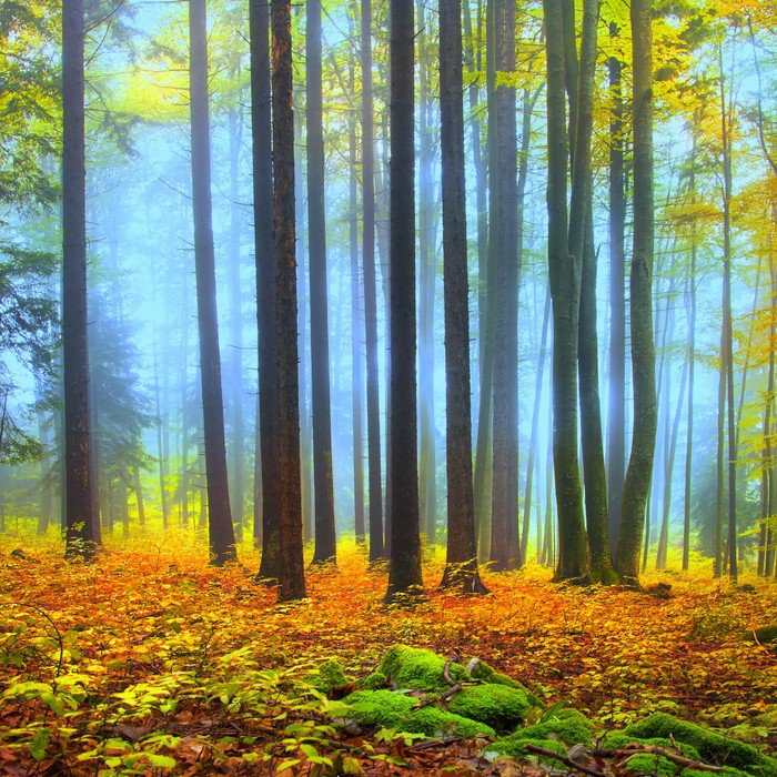 Wall Mural   Vinyl Colorful Autumn Forest Scene   Themes Part 67