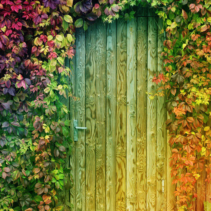Wall Mural - Vinyl colorful door entrance - Wonders of Nature