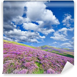Colorful hill slope covered by violet heather flowers Wall Mural - Vinyl