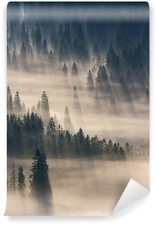 coniferous forest in foggy mountains Wall Mural - Vinyl