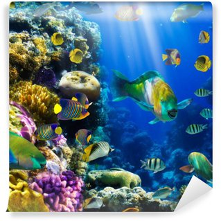 Vinyl Wall Mural Coral colony and coral fish