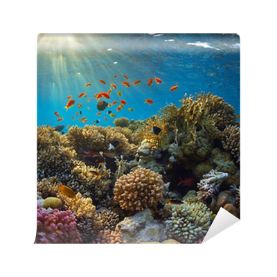 Coral reef Wall Mural • Pixers® • We live to change