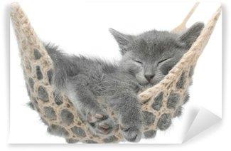 Wall Mural - Vinyl Cute gray kitten lying in hammock