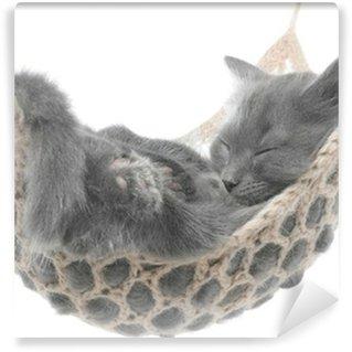 Wall Mural - Vinyl Cute gray kitten sleeping in hammock