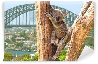 Cute Koala in Sydney, Australia Wall Mural - Vinyl