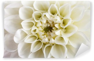 Dahlia flower close-up. Wall Mural - Vinyl