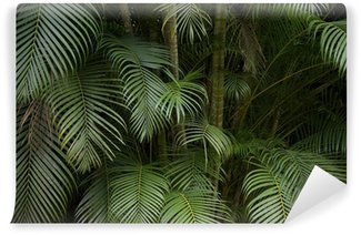 Vinyl Wall Mural Dark Tropical Jungle Palm Frond Background
