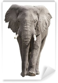 Elephant Isolated on White Wall Mural - Vinyl